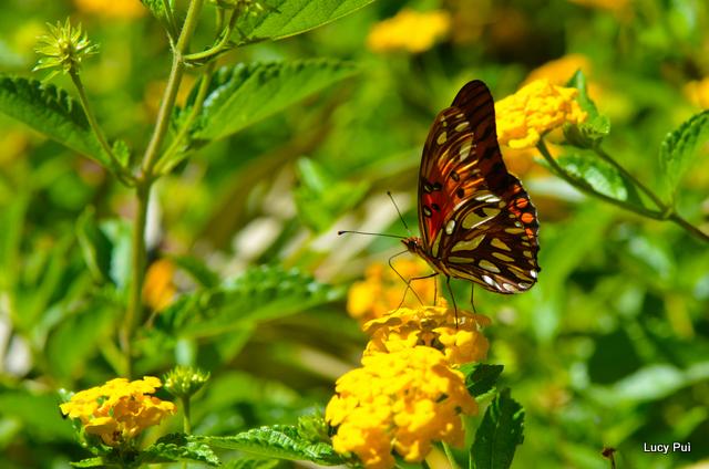 Flora y Fauna en la Reserva Natural Los Monigotes