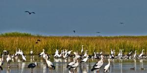 Primer Encuentro Nacional de Reservas Naturales Privadas